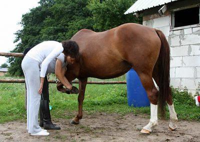 konie13